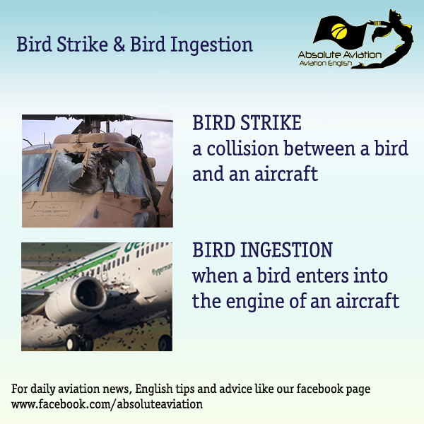 Bird Strike / Ingestion